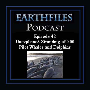 Episode 42 - Unexplained Stranding of 200 Pilot Whales and Dolphins