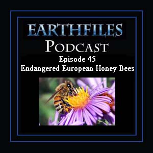 Episode 45 - Endangered European Honey Bees 