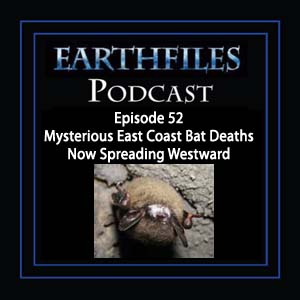 Episode 52 Mysterious East Coast Bat Deaths Now Spreading Westward