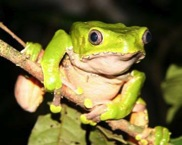 episode 9 Amphibian Monkey Frog